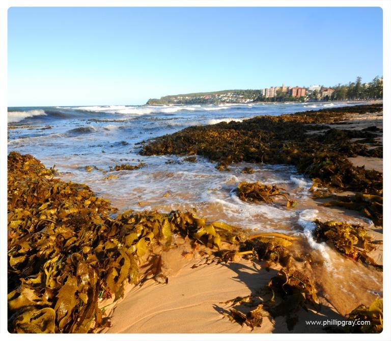 Sydney-Manly Seaweed1