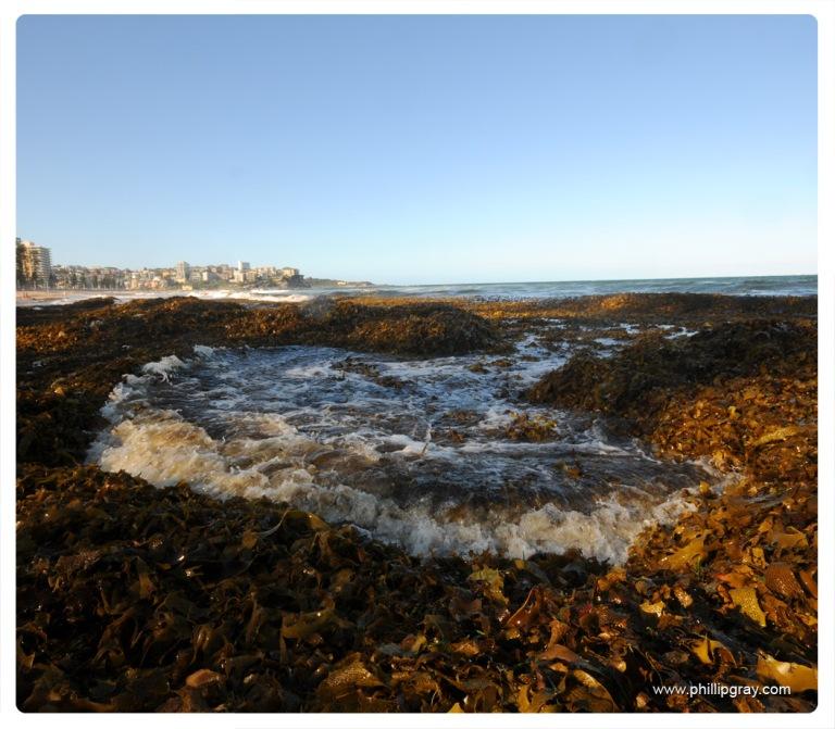 Sydney-Manly Seaweed2