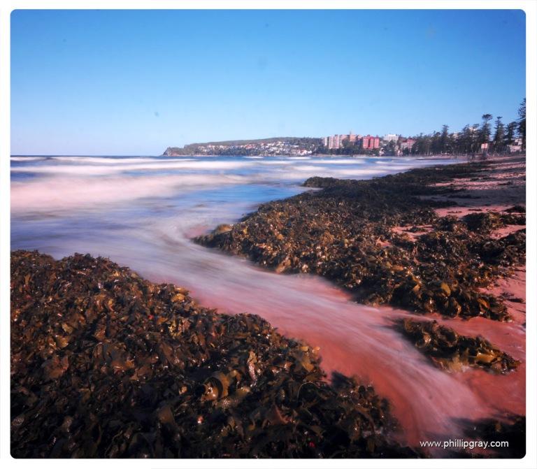 Sydney-Manly Seaweed3