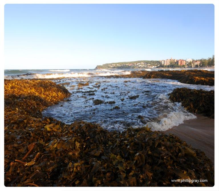 Sydney-Manly Seaweed4