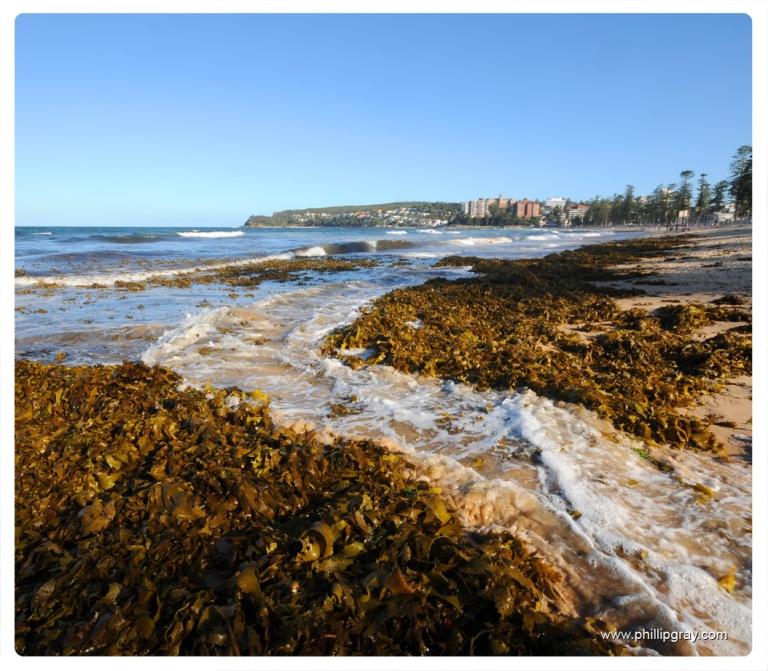 Sydney-Manly Seaweed5