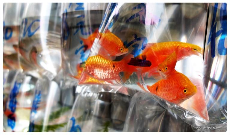 Hong Kong - Fish 1