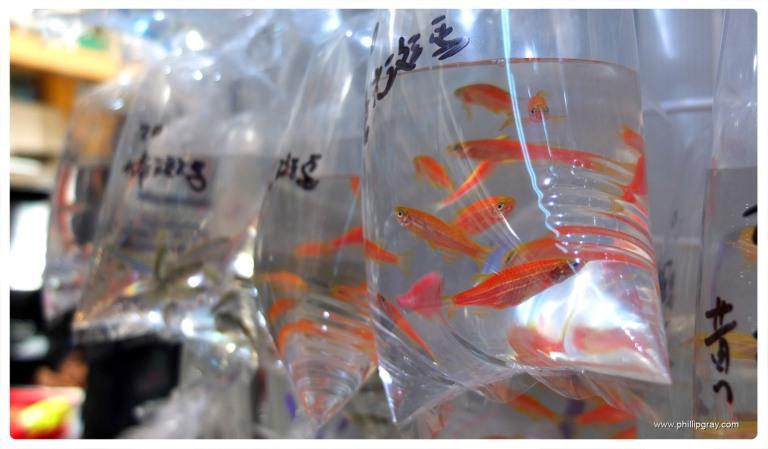 Hong Kong - Fish 5