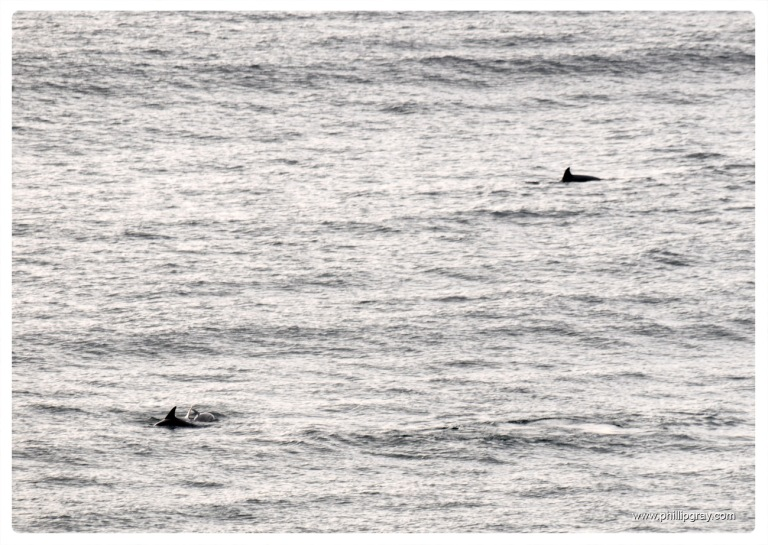 Sydney - Manly Dolphins 3