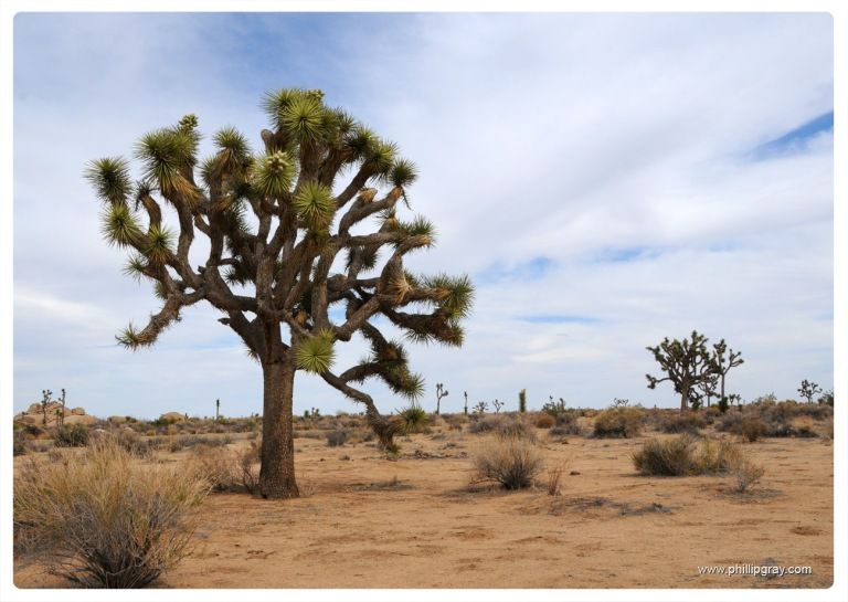 USA - CA - Joshua Tree NP 6